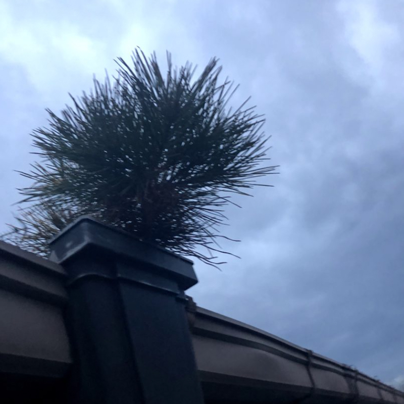 雨樋に草生える